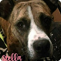 Adopt A Pet :: Stella - Des Moines, IA
