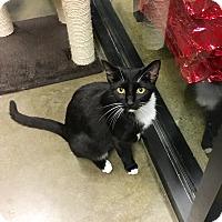 Adopt A Pet :: Tessa - Arlington/Ft Worth, TX