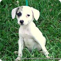 Adopt A Pet :: Kenzie - PRINCETON, KY