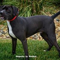 Adopt A Pet :: Jake - Frankfort, IL
