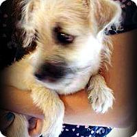 Adopt A Pet :: Amelia - Tijeras, NM