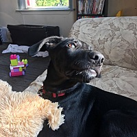 Adopt A Pet :: DIESEL - Oakbank, MB