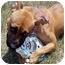 Photo 4 - Pit Bull Terrier Mix Dog for adoption in Huntington, New York - Tessa