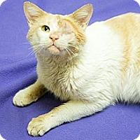 Adopt A Pet :: Georgie - Chicago, IL