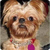 Adopt A Pet :: Ruby - Rigaud, QC