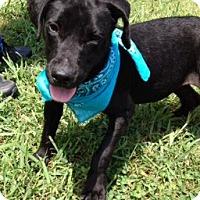 Adopt A Pet :: ANDY - Leland, MS