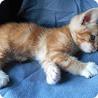 Adopt A Pet :: Marlin - Richland, MI