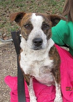 Shepherd (Unknown Type) Mix Dog for adoption in Bay Springs, Mississippi - S719 Molly