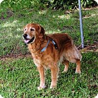 Adopt A Pet :: Leo - Murdock, FL