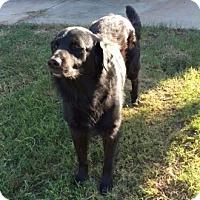 Adopt A Pet :: Noah - New Canaan, CT