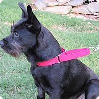 Adopt A Pet :: Spencer - Alpharetta, GA