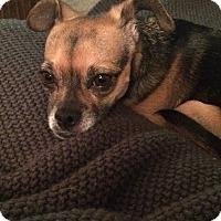 Adopt A Pet :: Greg - st peters, MO