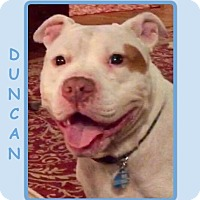 Adopt A Pet :: DUNCAN - Dallas, NC