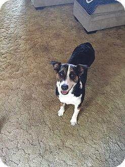 Border Collie/Shepherd (Unknown Type) Mix Dog for adoption in Keystone Heights, Florida - Mattie