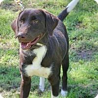 Adopt A Pet :: Oleta - Murphysboro, IL