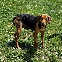 Adopt A Pet :: Betty - Cameron, MO