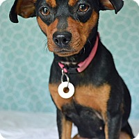 Adopt A Pet :: Lilah - Hagerstown, MD