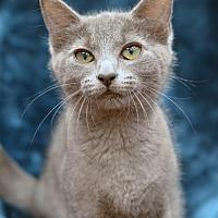 Adopt A Pet :: Nugget170712 - Atlanta, GA