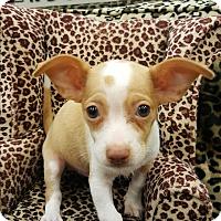 Adopt A Pet :: schools - Valencia, CA
