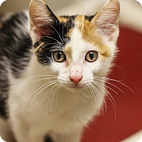 Adopt A Pet :: Marbles - Springfield, IL