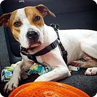 Adopt A Pet :: Sparky - PORTLAND, ME