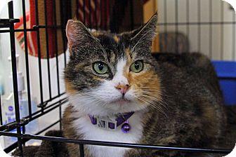 Domestic Mediumhair Cat for adoption in Tillamook, Oregon - Coco