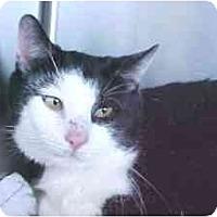 Adopt A Pet :: Hydro - Lunenburg, MA