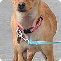 Adopt A Pet :: Koda - Simi Valley, CA