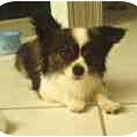 Adopt A Pet :: Leo - Pembroke Pines, FL