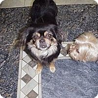 Adopt A Pet :: B A T _M A N - Cathedral City, CA