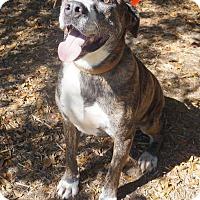 Adopt A Pet :: Lucky - Ravenel, SC