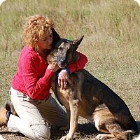 Adopt A Pet :: Bell AD 12-17-16 - Preston, CT
