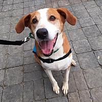 Adopt A Pet :: Daisy - New Kent, VA