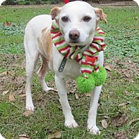 Jack Russell Terrier Dog for adoption in Lafayette, Louisiana - Peanut