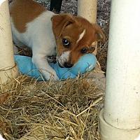 Adopt A Pet :: Chachi - Marlton, NJ