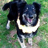 Adopt A Pet :: Gypsy - Vernon, TX
