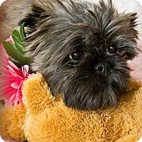 Adopt A Pet :: Coco-adoption pending - Omaha, NE