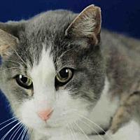 Adopt A Pet :: CALI - Fort Collins, CO