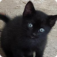 Adopt A Pet :: Puddin - Helotes, TX
