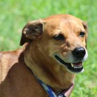 Adopt A Pet :: Fito - Glen Allen, VA