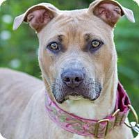 Adopt A Pet :: SALLY - Methuen, MA