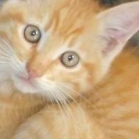 Adopt A Pet :: shilo - Opelousas, LA