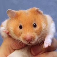 Adopt A Pet :: Martha - Mentor, OH