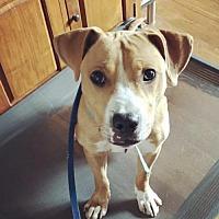 Adopt A Pet :: Milo (fka Sebastian) - Mount Laurel, NJ