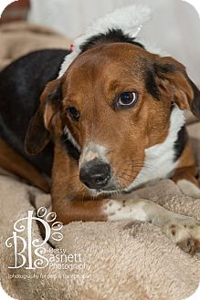 Beagle/Hound (Unknown Type) Mix Dog for adoption in Tallahassee, Florida - Shia