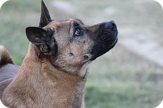 Basenji/Shar Pei Mix Dog for adoption in Waterbury, Connecticut - Speaker