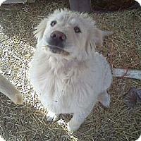 Adopt A Pet :: Dudley DoRight - Albany, NY