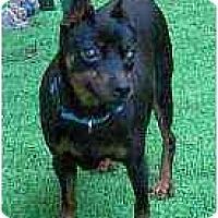 Adopt A Pet :: Evie - Summerville, SC