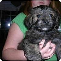 Adopt A Pet :: Theo - Glastonbury, CT