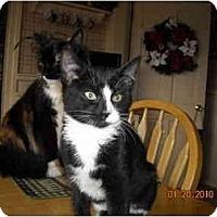 Adopt A Pet :: Pepper - Riverside, RI